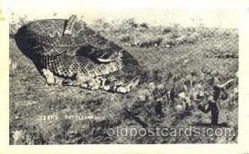 exa000155 - Texas RattlesnakeExaggeration Postcard Post Card