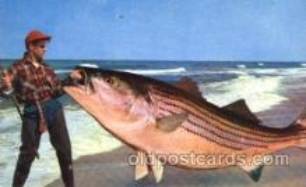 exa000158 - Exaggeration Postcard Post Card