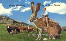 exa000175 - Huge jack rabbit Exaggeration Postcard Post Card