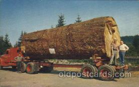 exa000176 - Giant Fir Log Exaggeration Postcard Post Card
