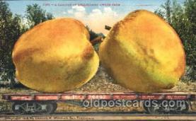 exa000177 - Big apples Exaggeration Postcard Post Card