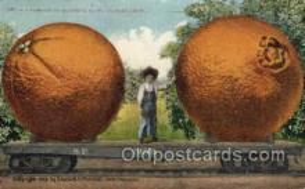 exa000183 - California Blackberries Exaggeration Old Vintage Antique Postcard Post Card