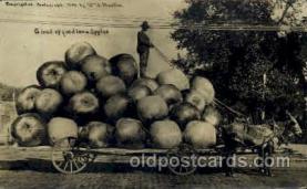exa001122 - Iowa Apples, Exaggeration Postcard Post Card