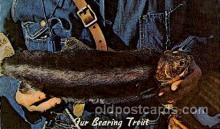 exa002019 - Our Bearing Trout, Exaggeration Postcard Post Card