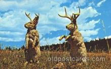 exa002031 - Jackalopes Exaggeration Postcard Post Card