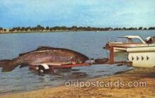 exa002033 - Big Fish Exaggeration Postcard Post Card