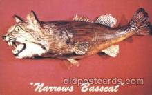 exa002039 - Narrow Basscat Exaggeration Postcard Post Card