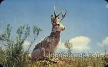 exa002095 - The Jackalope Exaggeration Old Vintage Antique Postcard Post Card