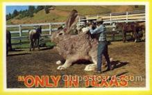 exa002125 - Texas Exaggeration Old Vintage Antique Postcard Post Card