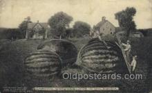 exa002146 - Watermelons in Oklahoma, USA Exaggeration Old Vintage Antique Postcard Post Card