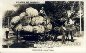 exa002178 - Winnipeg Manitoba Exaggeration Old Vintage Antique Postcard Post Card