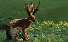 exa002192 - Jackalope Exaggeration Old Vintage Antique Postcard Post Card