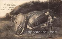 exa002261 - Watermelons 1908 WH Martin Postcards Post Cards Old Vintage Antique