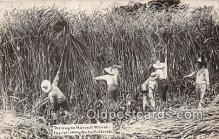 exa002262 - Harvest Wheat 1909 Martin Post Card Co Postcards Post Cards Old Vintage Antique