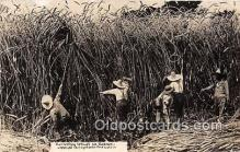 exa002263 - Harvest Wheat Kansas, USA Postcards Post Cards Old Vintage Antique