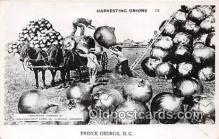 exa002273 - Harvesting Onions Prince George, BC Postcards Post Cards Old Vintage Antique