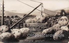 exa002275 - Potato Harvest  Postcards Post Cards Old Vintage Antique