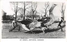 exa002280 - Geese to Market Essex, Ontario, Canada Postcards Post Cards Old Vintage Antique