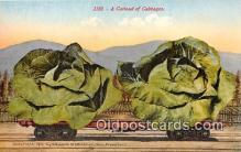 exa002296 - Carlod of Cabbages  Postcards Post Cards Old Vintage Antique