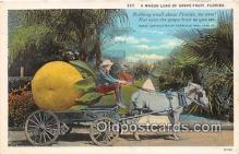 exa002306 - Wagon Load of Grape Fruit Florida, USA Postcards Post Cards Old Vintage Antique