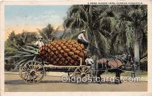 exa002308 - Florida Pineapple Florida, USA Postcards Post Cards Old Vintage Antique