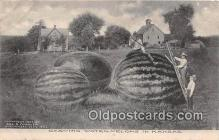 exa002332 - Carving Watermelons Kansas, USA Postcards Post Cards Old Vintage Antique
