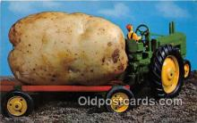 exa002354 - Maine Potato Maine, USA Postcards Post Cards Old Vintage Antique