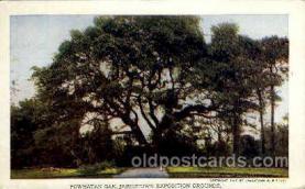 exp040064 - Powhatan oak Jamestown Exposition 1907, Postcard Post Card