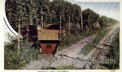 far001162 - Gathering Hops Farming, Farm, Farmer, Postcard Postcards