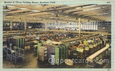 far001167 - Packing Farming, Farm, Farmer, Postcard Postcards