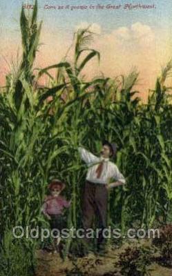 far001356 - Corn, Great Northwest Farming Old Vintage Antique Postcard Post Card