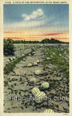 far001358 - Watermelons Farming Old Vintage Antique Postcard Post Card