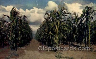 far001369 - Farming Old Vintage Antique Postcard Post Card