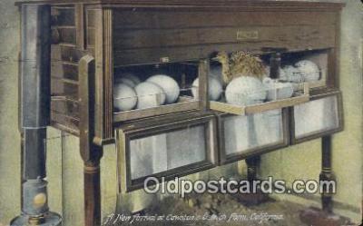 far001387 - New Arrival, Cawston's Ostrich Farm Farming Postcard Post Card