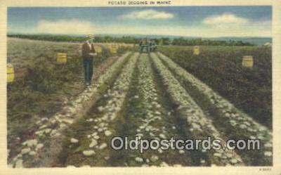 far001402 - Potato Digging Farming Postcard Post Card