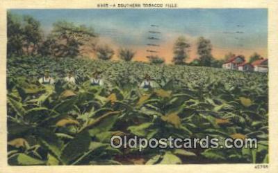 far001424 - Southern Tobacco Field Farming Postcard Post Card