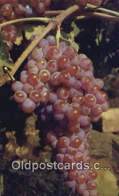 far001428 - Grapes Farming Postcard Post Card