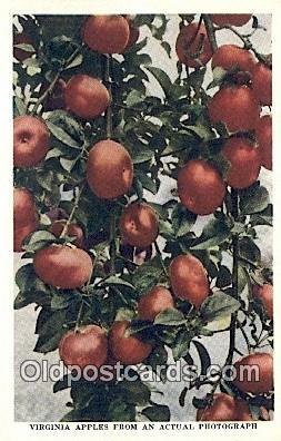 far001450 - Virginia Apples Farming Postcard Post Card
