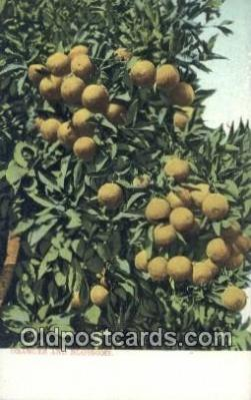 far001454 - Oranges & Blossoms Farming Postcard Post Card