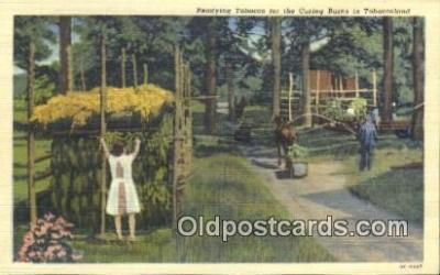 far001466 - Readying Tobacco Farming Postcard Post Card