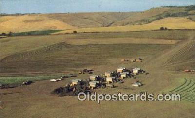 far001478 - Pea Harvest Farming Postcard Post Card