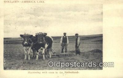 far001495 - Harrowing with Oxen Farming Postcard Post Card