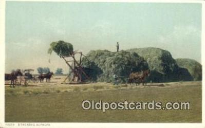 far001498 - Stacking Alfalfa Farming Postcard Post Card