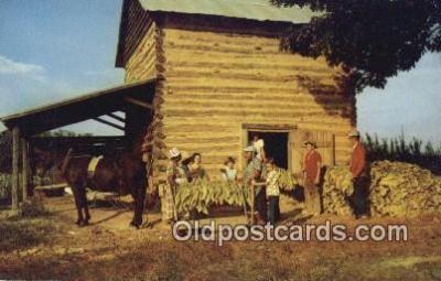 far001513 - Stringing Tobacco, Harvest Time Farming Postcard Post Card