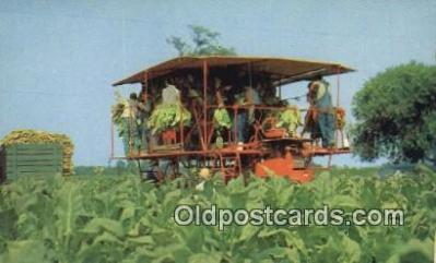 far001518 - Harvesting Tobacco Farming Postcard Post Card