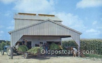 far001543 - Burning Tobacco Farming Postcard Post Card
