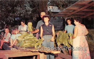 Stringing Tobacco