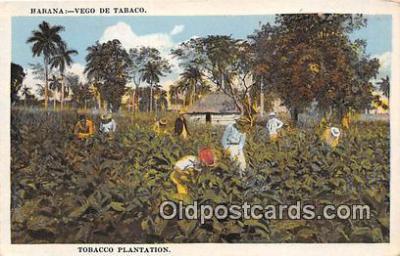 Habana Vego De Tobacco
