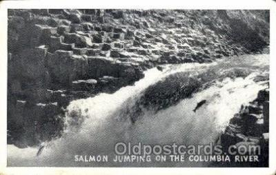 fis001089 - Columbia River, Salmone, Fishing Postcard Post Card