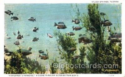 fis001095 - Fishermans Paradise, A scene through glass Bottom Boats, Fishing Postcard Post Card